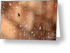 Spider Spots Greeting Card
