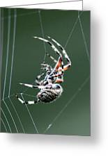 Spider - The Spinner Greeting Card