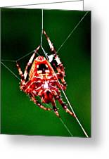 Spider Weaving Greeting Card