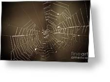 Spider Web 1.0 Greeting Card