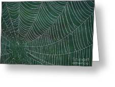 Spider Web With Dew Drops Greeting Card