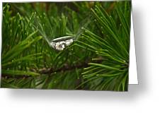 Spider Webs And Engagement Ring 11 Greeting Card