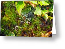 Spider Webs At The Farm Greeting Card