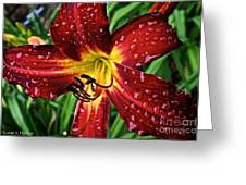 Spiderman The Day Lily Greeting Card