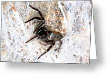 Spiders Trap Greeting Card