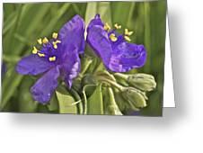 Spiderwort 2273 Greeting Card