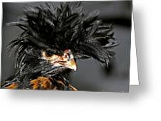 Spike - Punk Rocker Of The Chicken World Greeting Card
