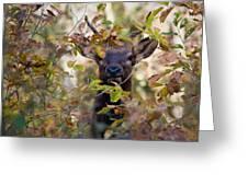 Spike Elk In Brush Greeting Card