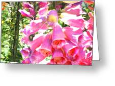 Spikes Of Pink Foxgloves Greeting Card