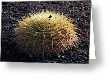 Spiky Greeting Card
