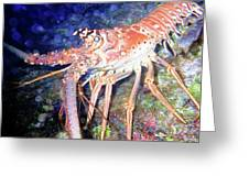Spiney Lobster Greeting Card