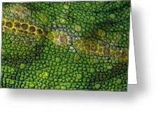 Spiny Desert Rhinoceros Chameleon Greeting Card