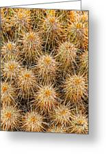 Spiny Prickly Sharp Greeting Card