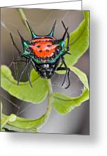 Spinybacked Orbweaver Spider Solomon Greeting Card