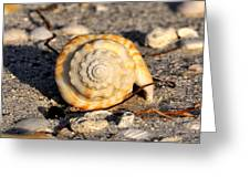 Spirals From The Sea Greeting Card