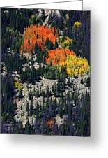 Splashes Of Fall Greeting Card