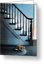 Spooked Cat By Stairs Greeting Card