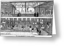Sports: Gymnastics, 1859 Greeting Card