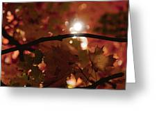 Spotlight On Fall Greeting Card