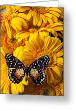 Spotted Butterfly On Yellow Mums Greeting Card