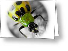 Spotted Cucumber Beetle Greeting Card by Maureen  McDonald
