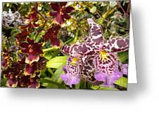 Spotted Flowers Greeting Card by Silvie Kendall