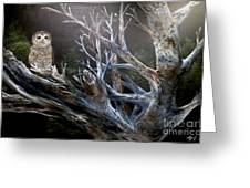 Spotted Owl In Tree Greeting Card