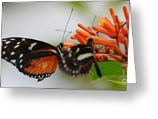 Spotted Tiger Glassywing Greeting Card