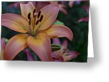 Spotty Lily Greeting Card