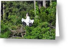 Spread Stork Greeting Card