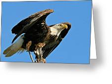 Spread Wings Greeting Card