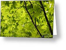 Spring - Beneath The Great Maple Greeting Card
