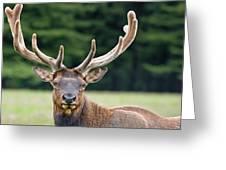 Spring Antlers Greeting Card