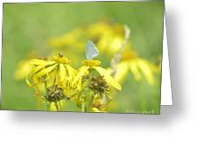 Spring Azure And Friend Greeting Card