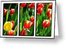 Spring Beauty Triptych Series Greeting Card