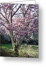 Spring Blooming Greeting Card