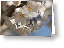 Spring Blooming Yoshino Cherry Tree Greeting Card