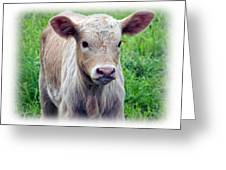 Spring Calf Greeting Card