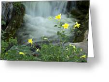 Spring Columbine Greeting Card