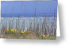Spring Comes To The Cape Greeting Card