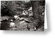 Spring Creek II Greeting Card