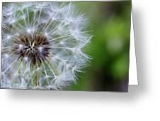 Spring Dandelion Greeting Card