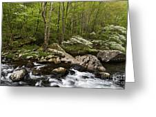 Spring Dogwoods On The Little River - D003829 Greeting Card