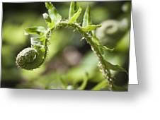Spring Fern Greeting Card