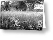 Spring Field Black And White Greeting Card