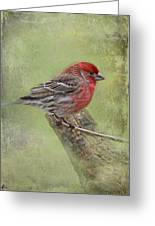Spring Finch Greeting Card