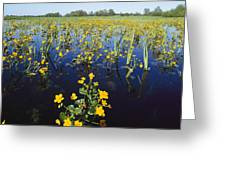 Spring Flood Plains With Wildflowers Greeting Card