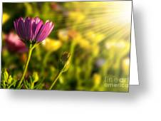 Spring Flower Greeting Card by Carlos Caetano