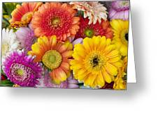 Spring Flowers Gerbera  Macro  Greeting Card