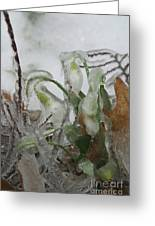 Spring Flowers In Ice Storm Greeting Card